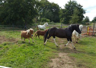 Ponyfreuden